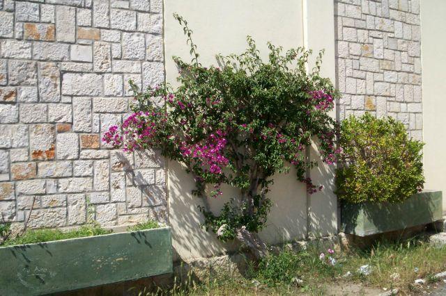 Temple_Palatin_-_Accueil_fleuri.jpg